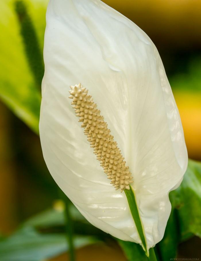 strange exotic flower