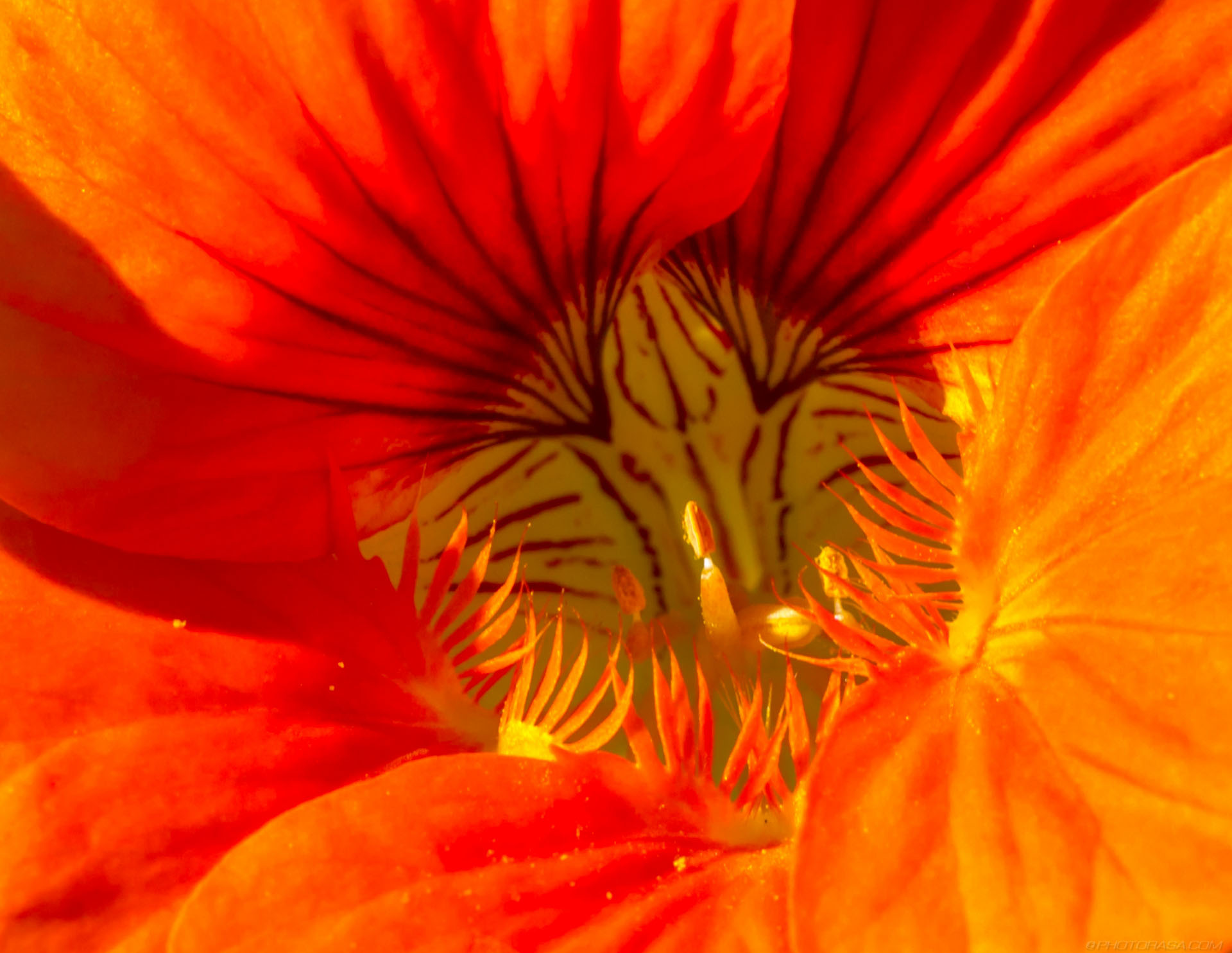 https://photorasa.com/strange-exotic-flowers/orange-striped-stamen/
