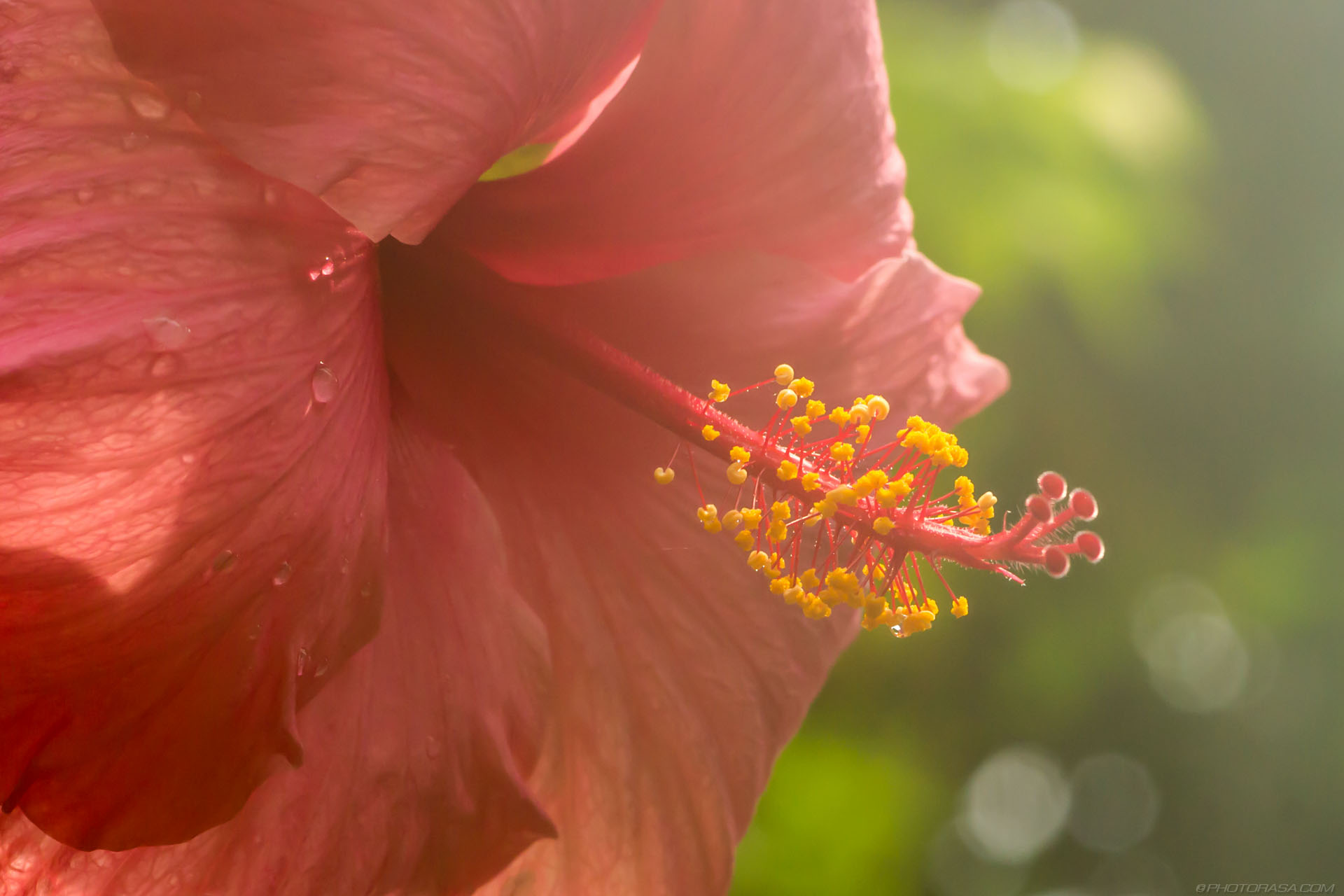 https://photorasa.com/strange-exotic-flowers/pink-flower-with-yellow-stamin-in-steamy-conditions/