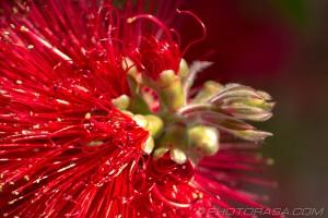 strange exotic red spaghetti flower