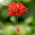 suspended hanging flower