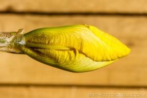strange yellow flower mouth