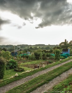 allotment path on a cloudy day
