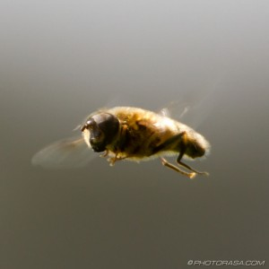 hover fly in motion