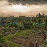 sunshine behind dark clouds over allotment plots