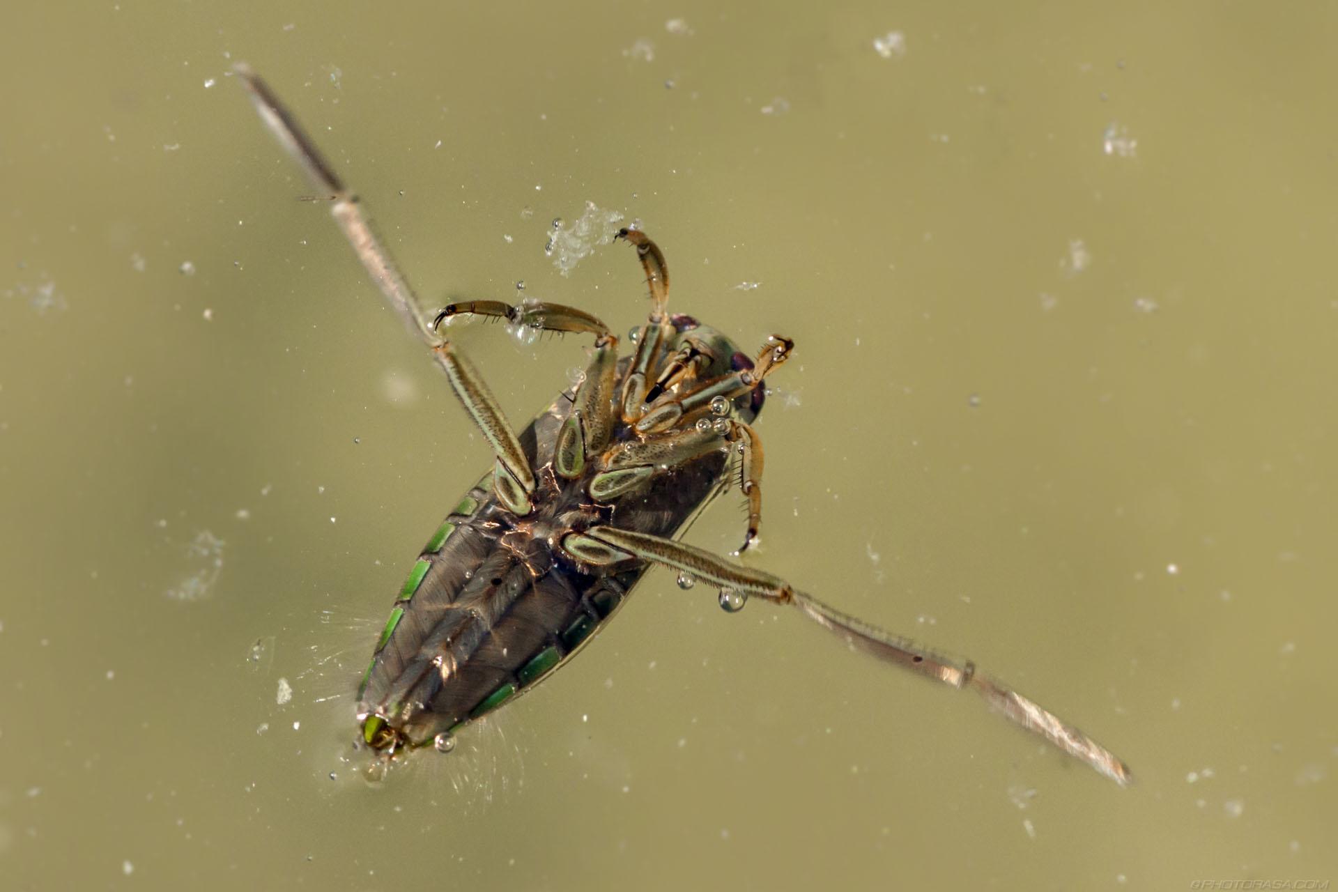 http://photorasa.com/dragonflies/dragonfly-larva/