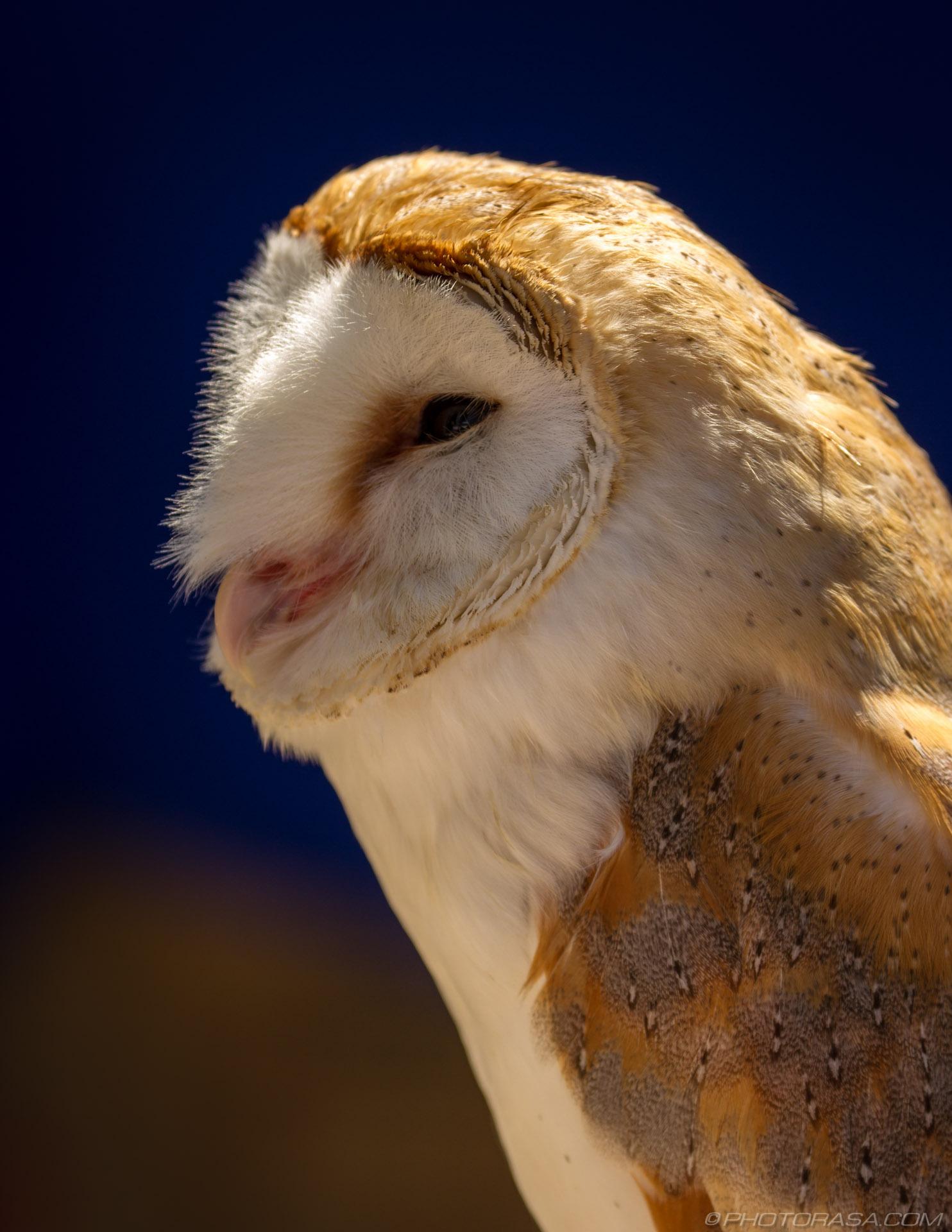 https://photorasa.com/owls/barn-owl-2/