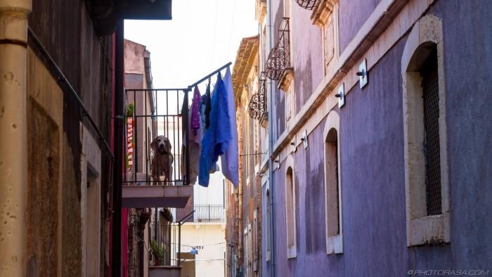 dog on a balcony