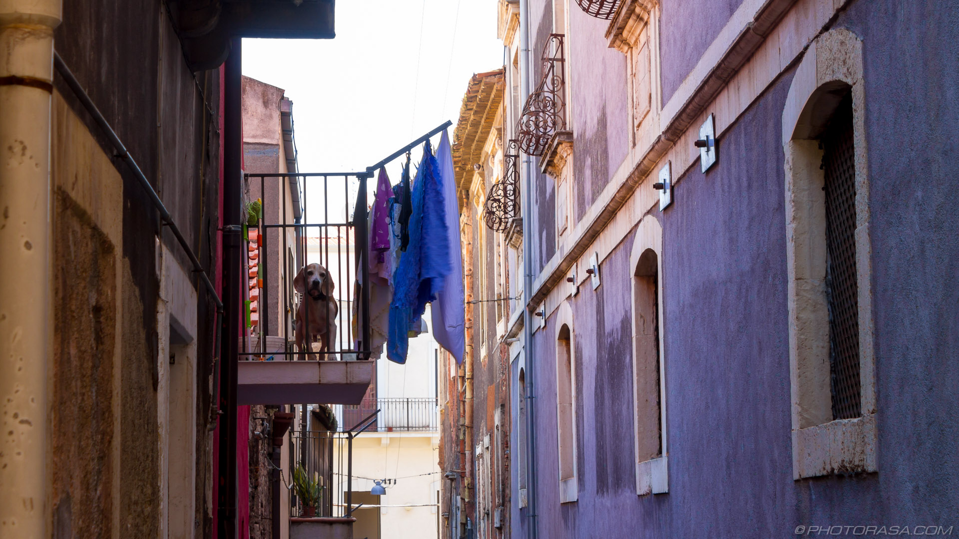 https://photorasa.com/catania/dog-on-a-balcony/