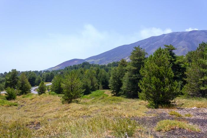etna trees