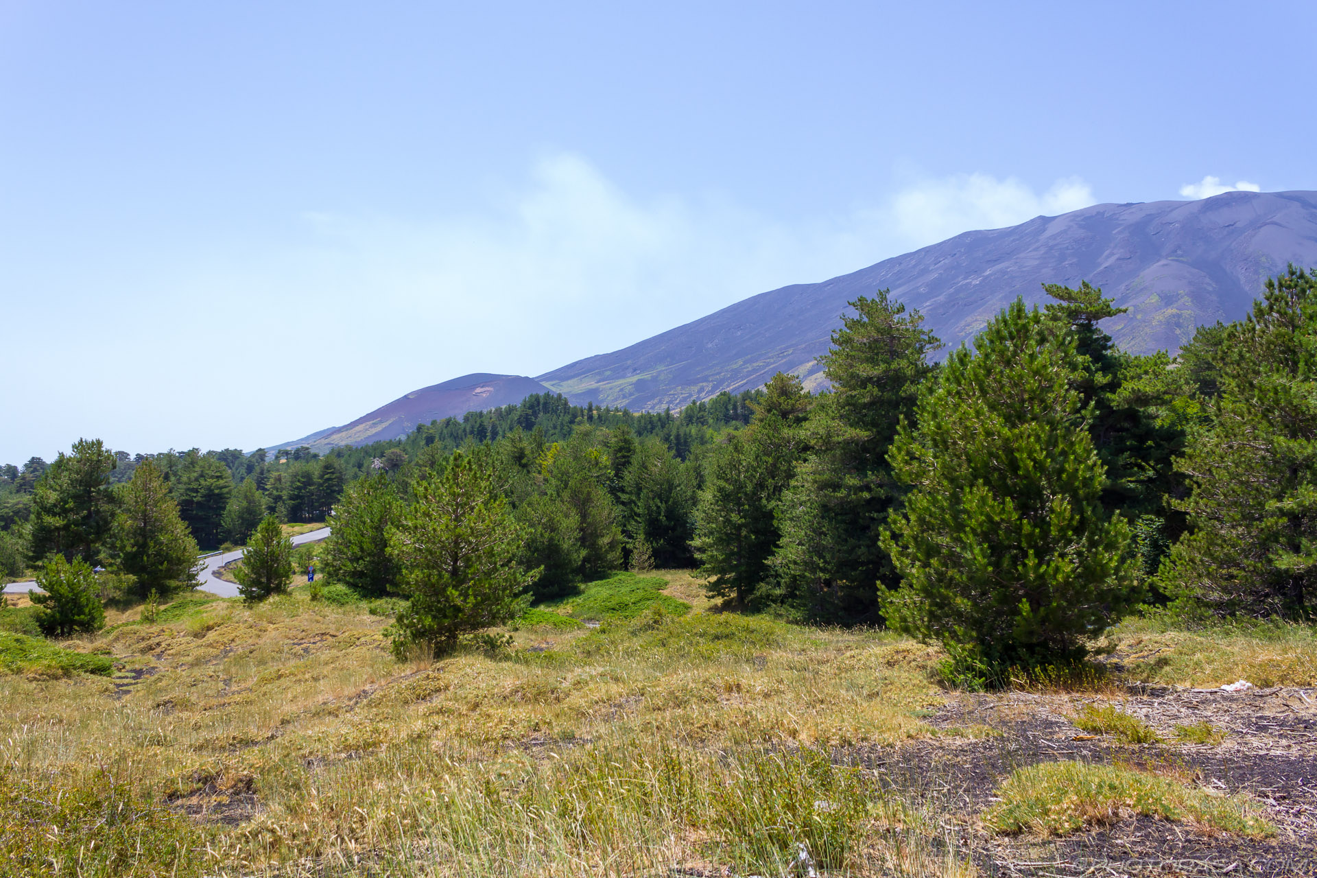 http://photorasa.com/mount-etna/etna-trees/