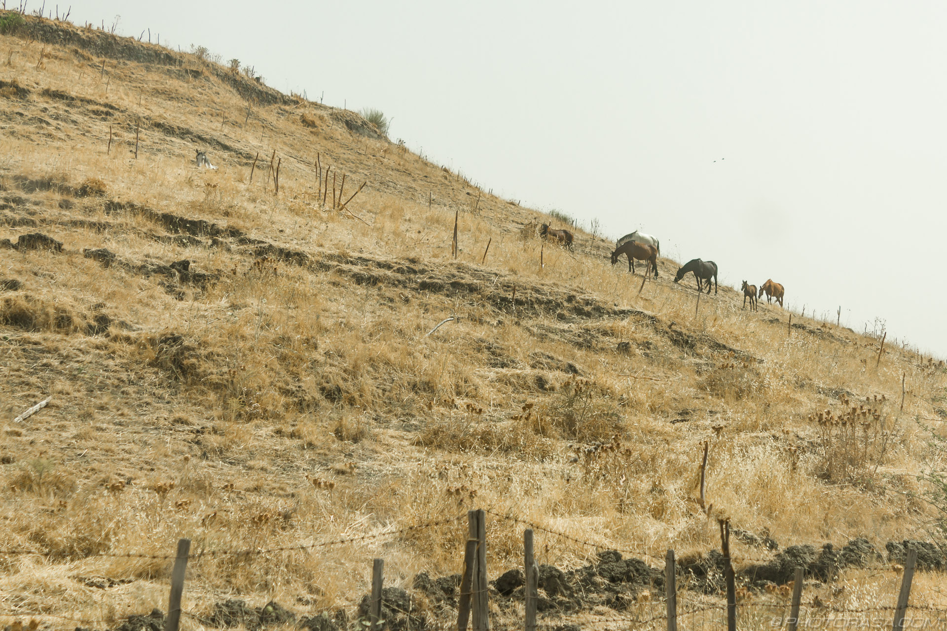 http://photorasa.com/horses-on-a-hillside/