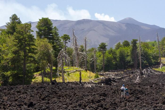 lava rock and petrified trees