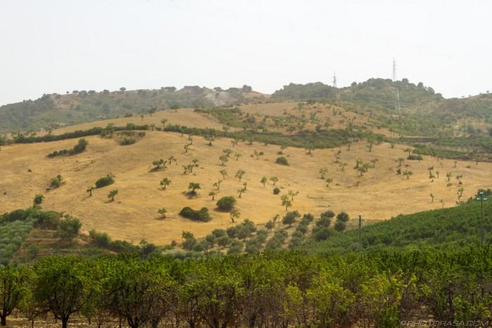 trees sprinkled across a hillside